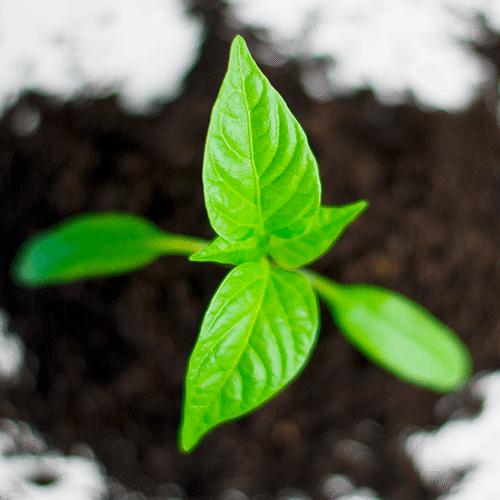 Growth Coaching
